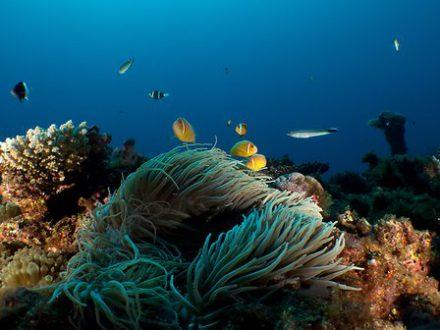 Séjour en Nouvelle Calédonie anémone de mer plongée île de Grande Terre un voyage routedelacaledonie.com