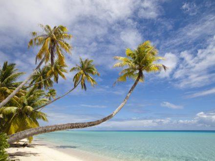 Vacances en Nouvelle Calédonie plage palmier île des Pins avec routedelacaledonie.com