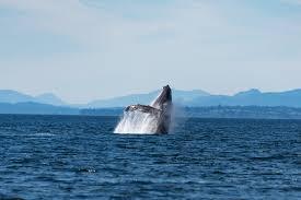 voyage nouvelle calédonie - sejour - circuit - excursion baleines